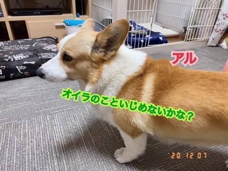 th_IMG_6136.jpg