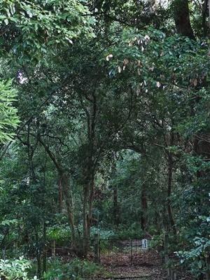御陵さんゲンジの森2008