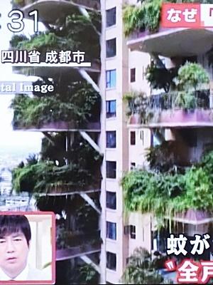 中国緑のタワマンに蚊発生2009