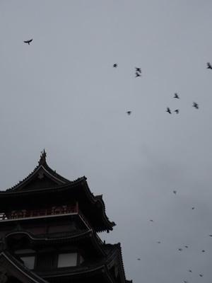 桃山城とカラス2011