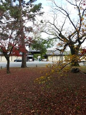 京都御苑落葉2012