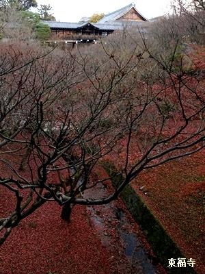 東福寺紅葉の後2012