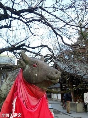 北野天満宮の牛2101