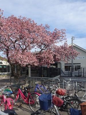 JR桃山駅と桜2103