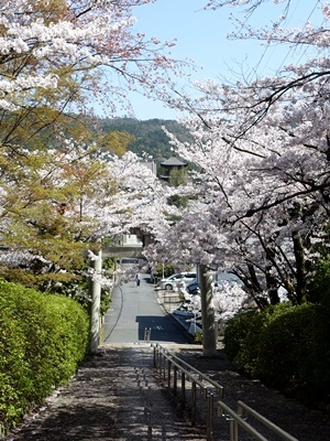 宗忠神社から真如堂を見る2104