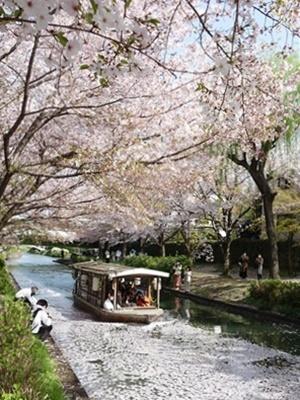 伏見十石舟と桜2104