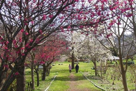中井町厳島湿生公園の花木