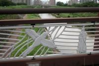 BL200729かささぎ橋1IMG_6537