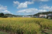 BL201001高山城~かいがけ道1bIMG_8276