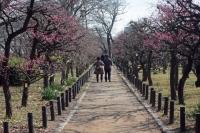 BL210203大阪城梅林2IMG_1892