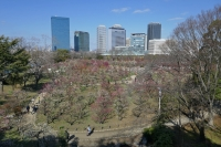 BL210219大阪城梅林3P1030864