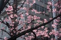 BL210315大阪城1IMG_2761