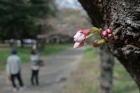 BL210317大阪城3IMG_2842