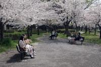 BL210329大川の桜4IMG_3265