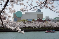 BL210329大川の桜7IMG_3269