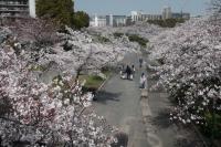 BL210329大川の桜1IMG_3249