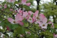 BL210423大阪城9IMG_3942