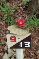 BL210424岩湧山1-8IMG_3987