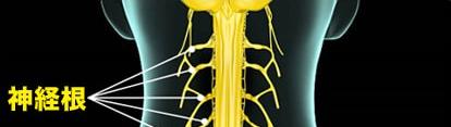 首の神経画像1