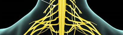 首の神経画像2