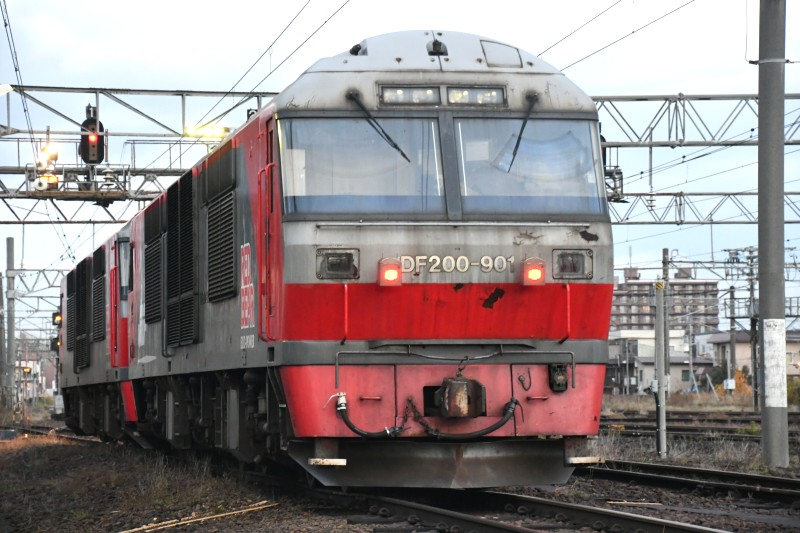 DF901DSC_3320-2.jpg