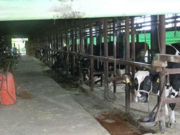 千葉県酪農農家飲水改善1