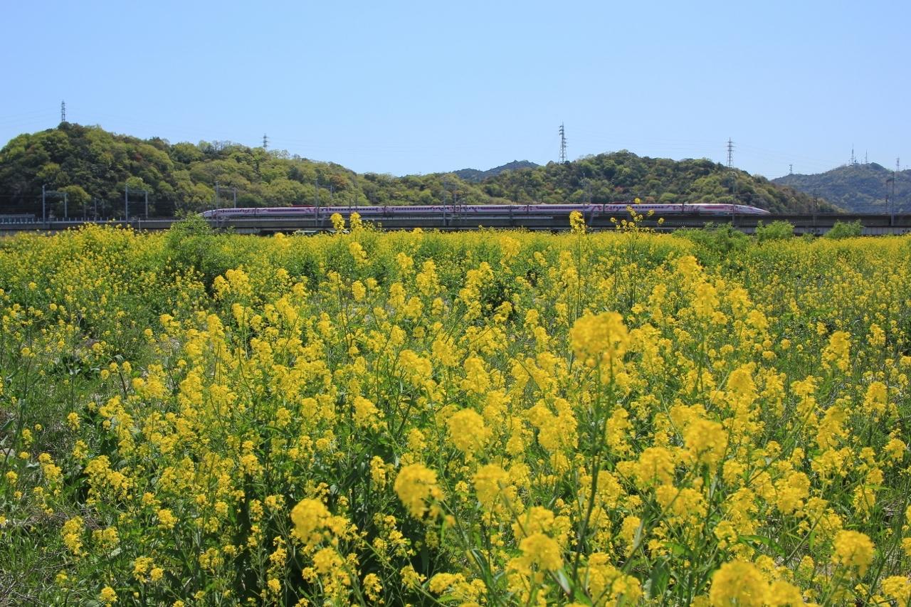 市川橋梁 (11) (1280x853)