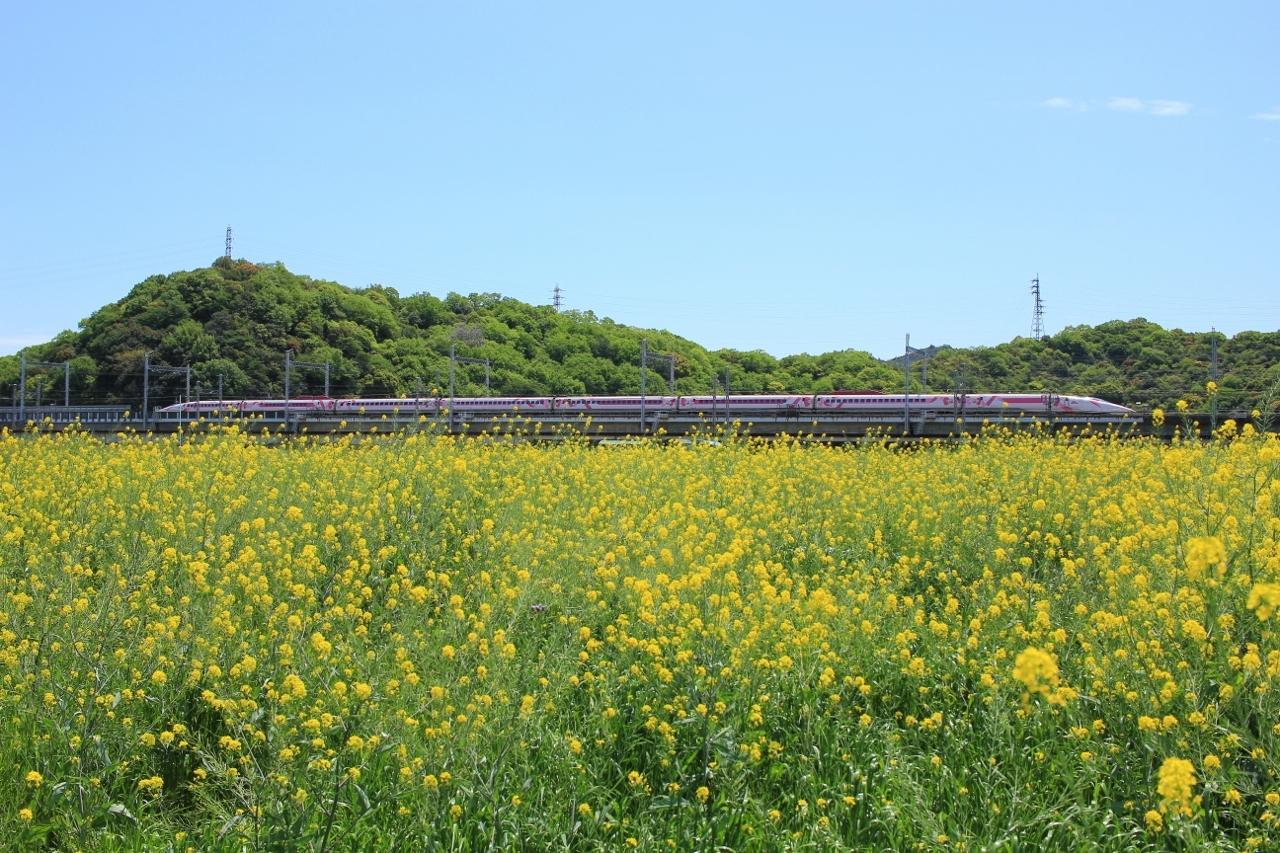 市川橋梁 (14) (1280x853)