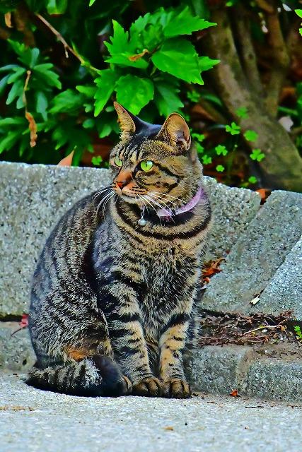 佐賀関の猫ちゃん
