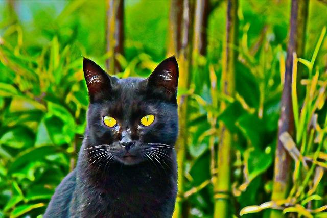自販機の上にいた黒猫ちゃん