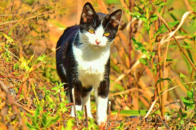 干拓地の猫ちゃん