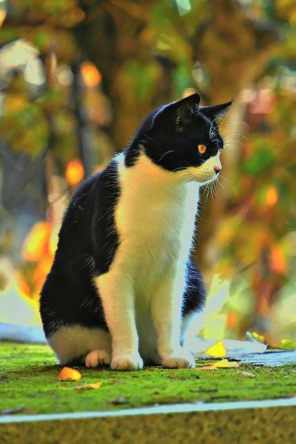長安寺さんにいた猫ちゃん2