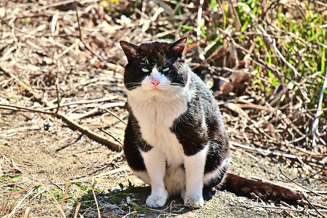 自然公園のネコさん