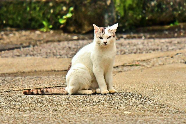 県南四浦半島のネコさん