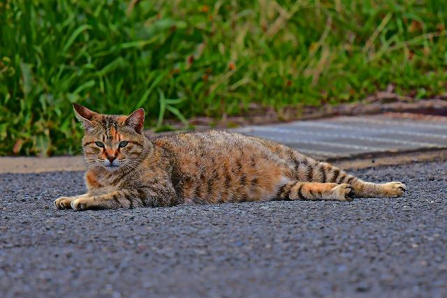 遠征先の 猫ちゃん