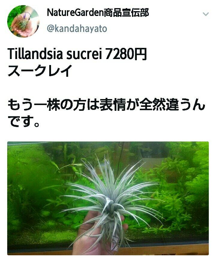 sucrei015.jpg