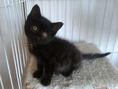 黒猫、サン