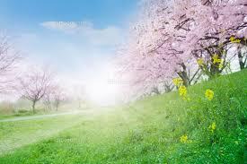 写真 春の日差し
