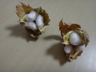 生命力のある和綿