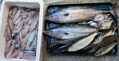 漁吉丸の魚ハガツオ