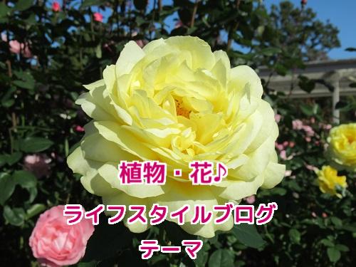 植物・花♪ ライフスタイルブログ・テーマ