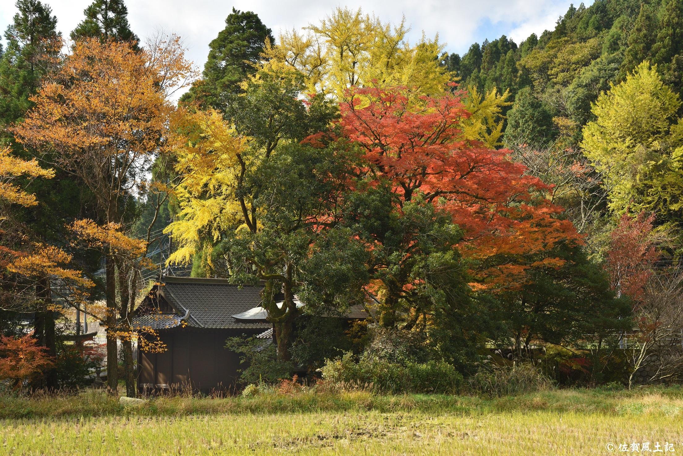白石神社①:DSC_8254