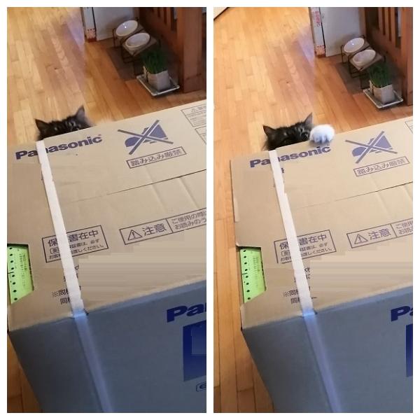 大きな箱1