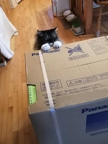 大きな箱2