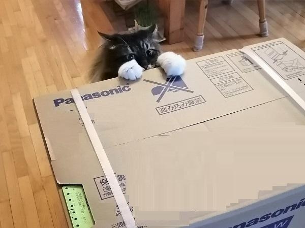 大きな箱3