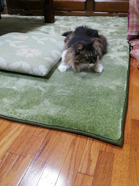 おニューのカーペット