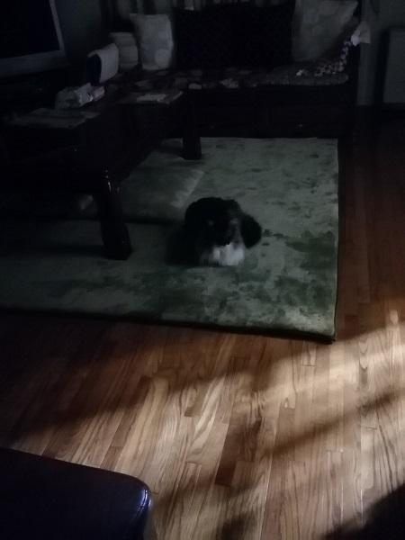 おニューのカーペット4