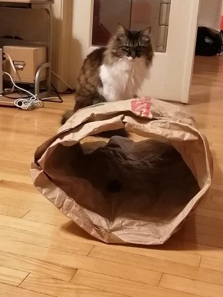 紙製カシャトン