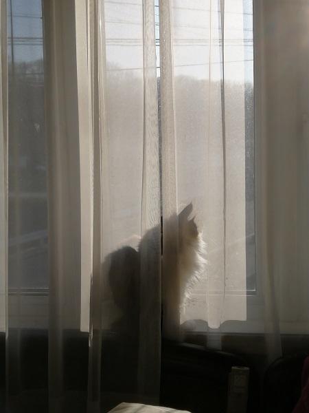 猫の日でしたが