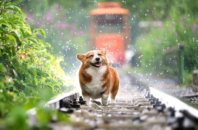 dog-4415649_640.jpg